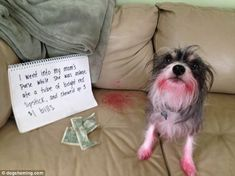 Dog Shaming features the most hilarious, most shameful, and never-before-seen doggie misdeeds. Join us by sharing in the shaming and laughing as Dog Shaming reminds us that unconditional love goes both ways. Dog Shaming Pictures, Funny Dog Photos, Funny Animal Pictures, Hilarious Photos, Funny Animal Memes, Cute Funny Animals, Funny Dogs, Cute Dogs, Animal Funnies