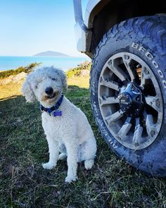 Image may contain: dog, outdoor and nature All Terrain Tyres, Dog Travel, Offroad, Dogs, Nature, Life, Outdoor, Image, Instagram