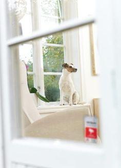 Mascota dentro de una casa protegida con una #alarma #Verisure compatible con mascotas.    Si desea dejar su alarma conectada pero tiene animales en casa, deje a sus mascotas en zonas que no estén protegidas por detectores de movimiento.