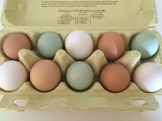 Bio Eier Grünleger Hühnerhaltung