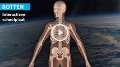 Je lichaam: botten