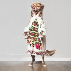 Guide de 340+ pages pour apprendre à dresser son chien facilement et rapidement. Eduquer son chien en 15 minutes par jour. chien méchant apprentissage canin Cute Puppies, Kittens, Kimono Top, Guide, Dogs, Education, Women, Fashion, Learning