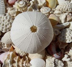Beachcombers Dream- a complete urchin shell- I found one on a beach in Newfoundland. One of my favourite treasures.