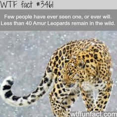 The most beautiful creature - WTF fun facts