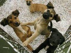 unos cachorritos