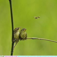 The Birds and the Bees :)