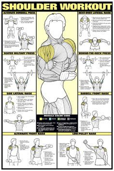 SHOULDER WORKOUT WALL CHART Professional Strength Training Fitness Gym Poster in   eBay
