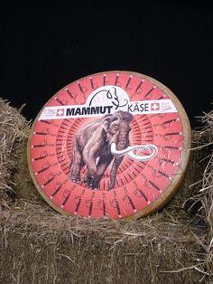 mammut kase - Suiza