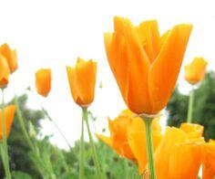 Flowers Photo: Flower Wallpaper