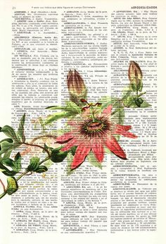 Winter Sale 10% off Passion Flower book print Book by PRRINT