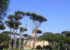 """Roma - The """"Casina del'Orologio"""" surrounded by pine trees (Pinus pinea), via Flickr."""