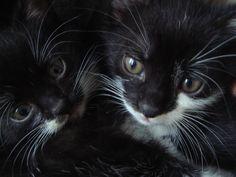 .nasze byłe kotki..foto Barbara Zadros 2013r