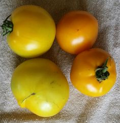 Heirloom Tomatoes:  Lemon Boy and Pineapple