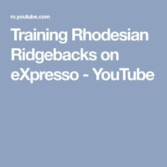 Training Rhodesian Ridgebacks on eXpresso - YouTube