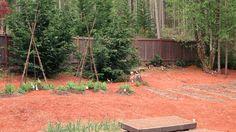 Mavis Butterfield | Backyard Garden Plot Pictures – Week 18 of 52