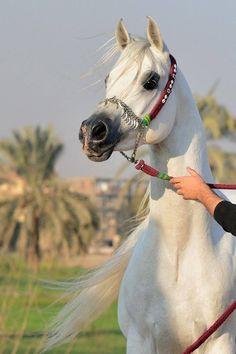 Gorgeous Arab!