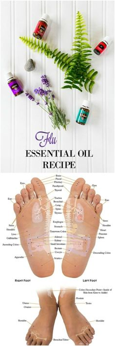 Young Living Essential Oil Recipe For The Flu. Essential Oils Flu, Young Living Essential Oils Recipes Cold, Essential Oil Cold Remedy, Natural Essential Oils, Essential Oil Diffuser, Essential Oil Blends, Natural Oils, Oil Recipe, Young Living Sinus