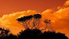 Arbre dans le paysage !!!... #paysage #paysages #arbre #arbres #nature