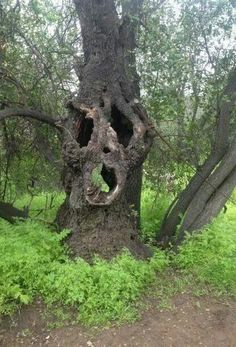 Spooky Tree - beyond spooky - how cool are trees?????? so very very cool!!!