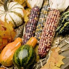 How to Plant Corn, Pole Beans, & Squash Together