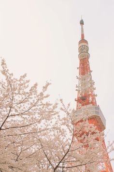 Top 10 Places to Visit in Japan