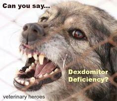 Dexdomitor deficiency :P