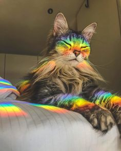 The wise rainbow cat - your daily dose of funny cats - cute kittens - pet memes - pets in clothes - kitty breeds - sweet animal pictures - perfect photos for cat moms Cute Funny Animals, Cute Baby Animals, Animals And Pets, Funny Cats, Sleepy Animals, Funny Humour, Funny Memes, Cute Kittens, Cats And Kittens