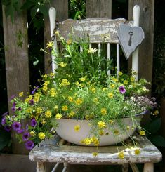 Old chair ...dishpan full of plants / flowers ...
