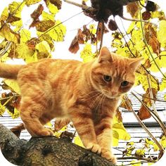My cat by BlondSweetheart, via Flickr