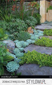 Plants for rock edging