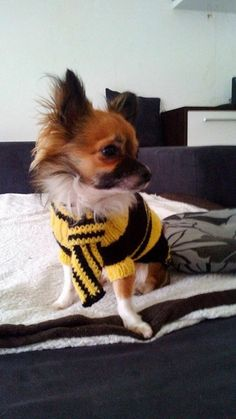 Hundepullover selber gemacht  Dog Sweater,Puppy   www.facebook.com/Hundepulloverselbstgestrickt