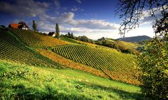 Southern Styria Austria, Salzburg, Tobias, Oh The Places You'll Go, Homeland, Vineyard, To Go, Southern, Around The Worlds