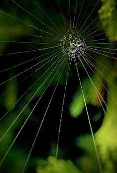 Star-burst web drenched in dew