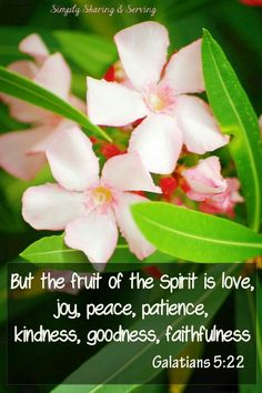 But the fruit of the spirit