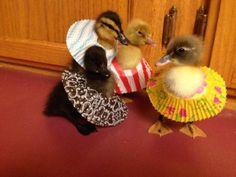 DUCKLINGS WEARING CUPCAKE PAPER DRESSES