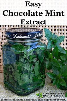 Homemade Mint Extract - This easy chocolate mint recipe is a great way to use your home grown mint for cooking, baking, hot chocolate, gift giving and more.(Chocolate Mint Uses) Chocolate Mint Plant, Menta Chocolate, Homemade Chocolate, Hot Chocolate, Chocolate Mints, Chocolate Extract, Chocolate Caliente, Chocolate Recipes, Mint Recipes