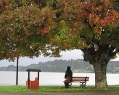 Frutillar - Chile Spring Is Coming, Amazing Places, Benches, Serenity, The Good Place, Grass, World, Outdoor Decor, Lakes