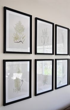 Free printable vintage fern study prints | The Painted Hive