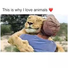 Cute animals - This Is Why I Love Animals ❤️animals animallovers lovelyanimalsworld dogs doglovers puppy puppies cats catlovers kitten cats catlovers kitten chicken bear horse lion Funny Animal Memes, Cute Funny Animals, Cute Baby Animals, Animals And Pets, Cute Cats, Funny Dogs, Smiling Animals, Funny Dachshund, Cute Animal Videos