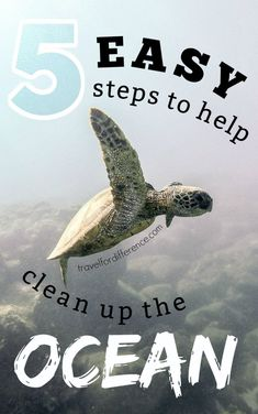Plastic pollution, plastic waste and plastic products in general are a massive concern to our beautiful oceans. Here are 5 easy steps that you can help to clean up the ocean, save our wildlife and care for our earth and its environment! #PlasticWaste #PlasticPollution #SaveOurOcean