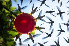 http://www.boredpanda.es/foto-compuesta-comedero-colibries-brian-maffitt/