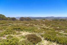 The Australian Alps - Mt Cope (Bogong High Plains near Falls Creek) Woman In Gold, Falls Creek, Victoria Australia, Alps, Hiking, Country Roads, Explore, Boots, Water