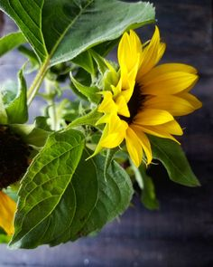 Weekend is almost here! I want to remind you once again to treat yourself to some flowers! Condo Living, Retail Therapy, Sunflowers, Flower Power, Plants, Inspiration, Biblical Inspiration, Condominium, Plant