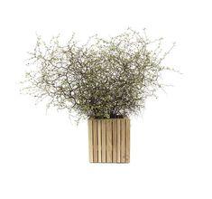 Dandelion, Flowers, Plants, Garden, Upcycled Crafts, Nature, Garten, Dandelions, Planters