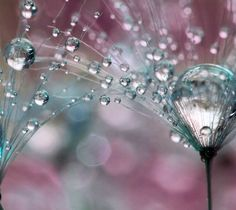 Macro photography of drops..