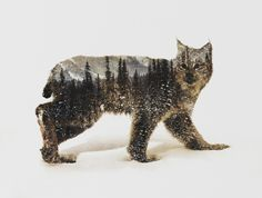 Arctic Lynx Art Print for bedroom?