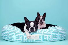Check out Contemporary Pet Pouf for Cats & Dogs | Round Pet Bed | Turquoise and White Pouf | Cat Bed | Dog Bed | Minky Pet Bed | Washable Pet Bed on originaldigsllc