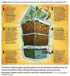 Ilustração de minhocário feito pela Revista Mundo Estranho