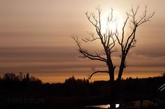 Mysterious sunset scenery in Sigulda Latvia   by BlossomingDream