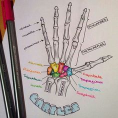 "Sarah Clifford is ""a medical student and a biology tutor with a passion for creating illustrated notes."" We think these illustrated notes for medical school are great study help! Life Hacks For School, School Study Tips, School Life, Nursing School Notes, Medical School, Nursing Schools, Medical Students, Nursing Students, Radiology Student"